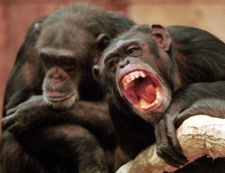 Unstete Gesellen: Gedanken springen mitunter wie Affen von Baum zu Baum