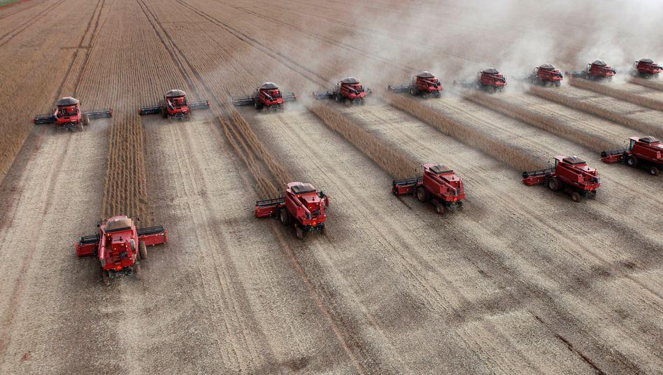 Sojafeld in Basilien: Kapitalintensive landwirtschaftliche Betriebe in Lateinamerika sind durch die Krise besonders gefährdet.