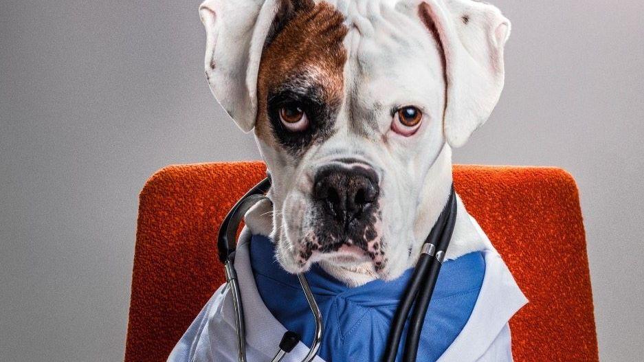 Auf den Hund gekommen: Tiere werden zu Ersatzmenschen – und die Tiermedizin wird zu einem Milliardengeschäft
