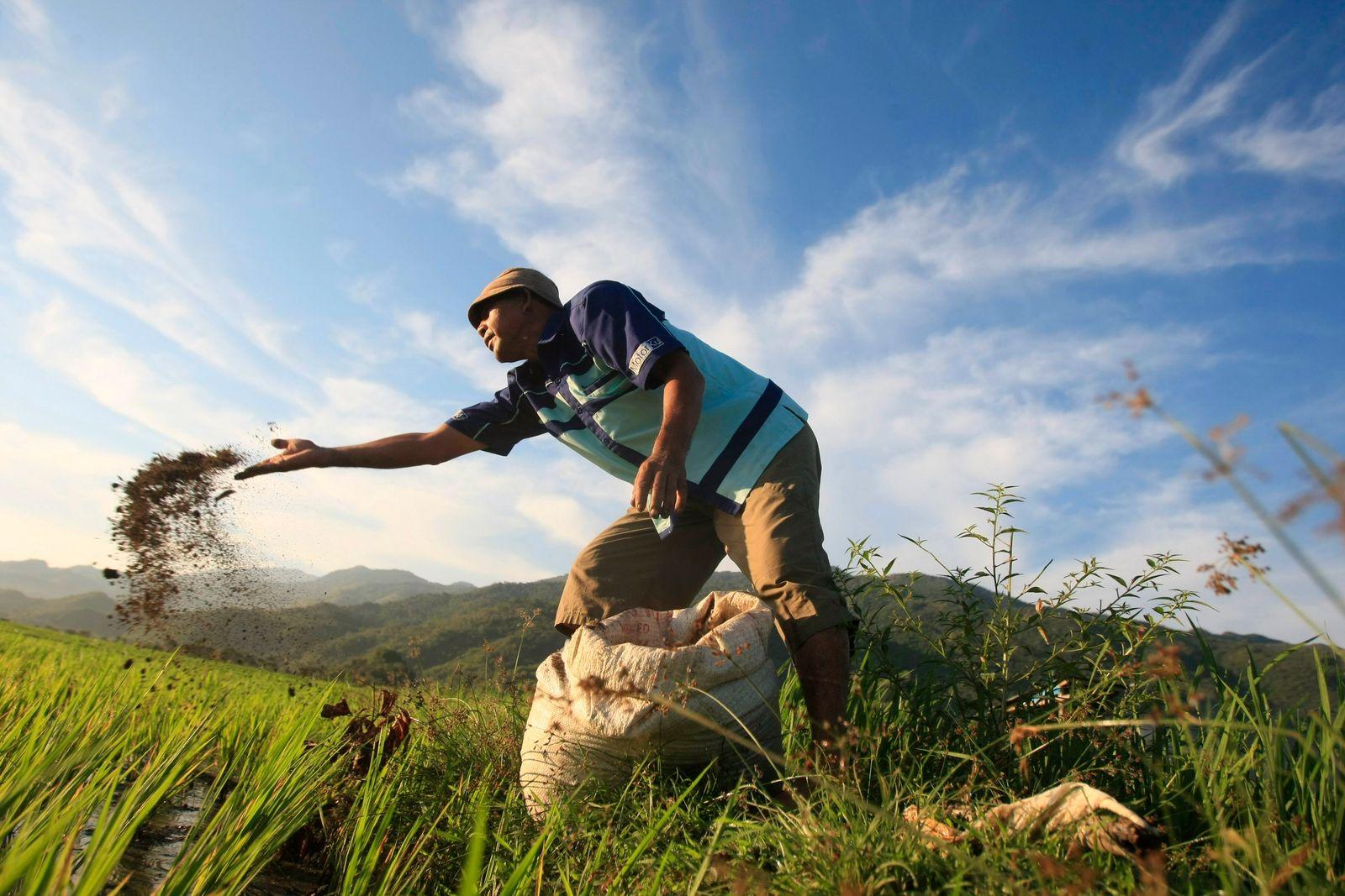 Landwirtschaft / Düngemittel / Indonesien