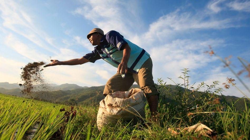 Farmer in Indonesien düngt sein Feld: BASF hat in einigen Sparten herbe Einbußen hinnehmen müssen. Das Quartalsergebnis im Bereich Agrarchemie zum Beispiel brach um 84 Prozent ein
