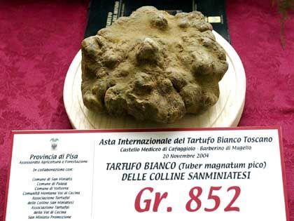 Rekordverdächtig: Dieser 852 Gramm schwere Trüffel wechselte bei einer Auktion in Italien im November 2004 für 39.880 Euro seinen Besitzer. Käufer war das Spitzenrestaurant Zafferano in London