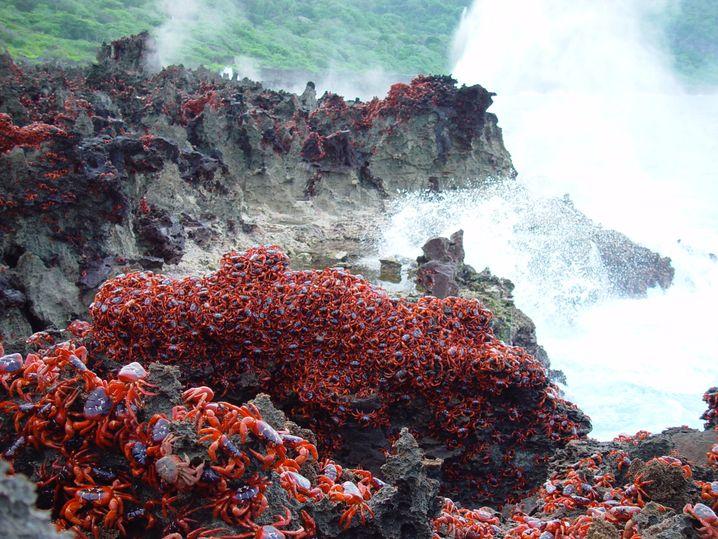 Die Kokosinseln sind bekannt für ihre Krabbenwanderung. Unter den Inselparadiesen im Indischen Ozean sind sie noch echte Unbekannte.
