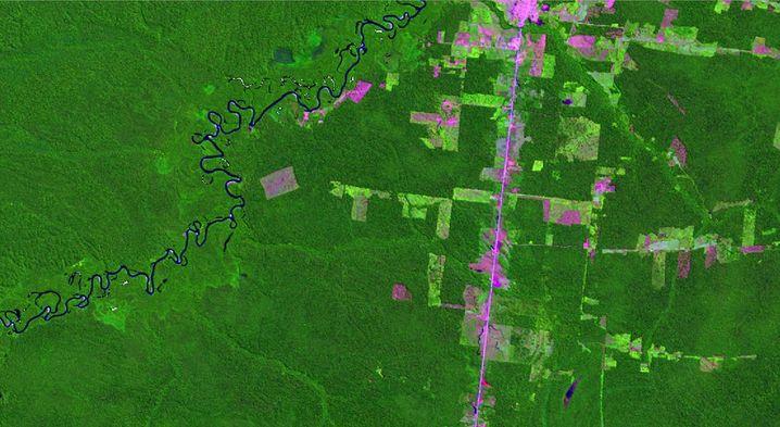 Satellitenbild von neuen Rodungsflächen im Amazonas-Gebiet