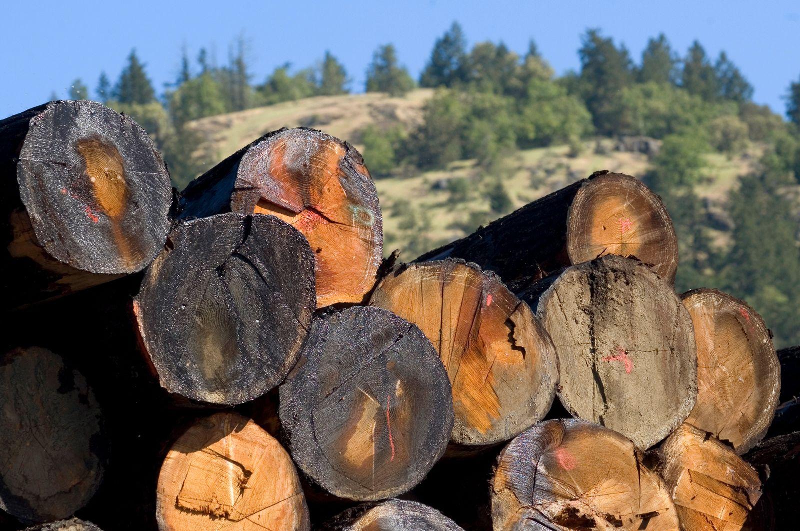 Holz / Ressourcen - Pallettboom in Canada