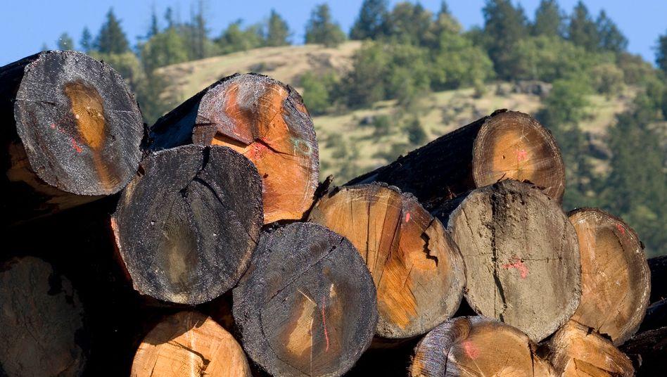 Nebenwirkung der europäischen Klimapolitik: Kanadas Holzindustrie lebt auf