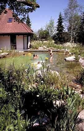 Alternative zum Swimmingpool: Der Schwimmteich
