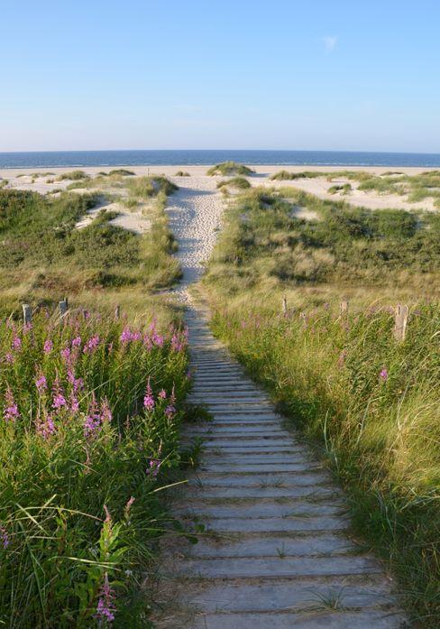 Wanderung an die Ostspitze der Insel Wangerooge: Vom Dünenkamm aus ist am Horizont die Nordsee zu sehen