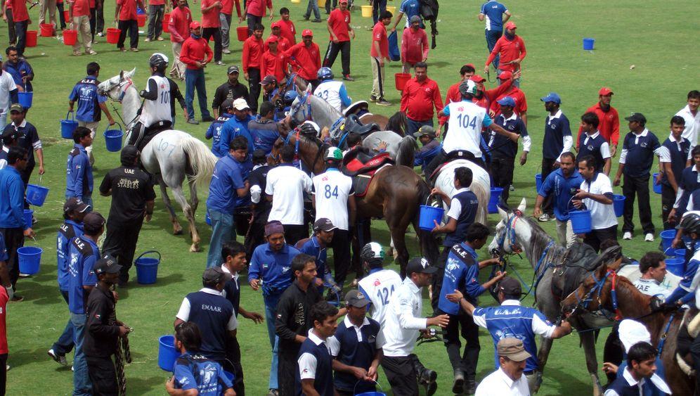 Edle Pferde: Arabiens Reiterglück