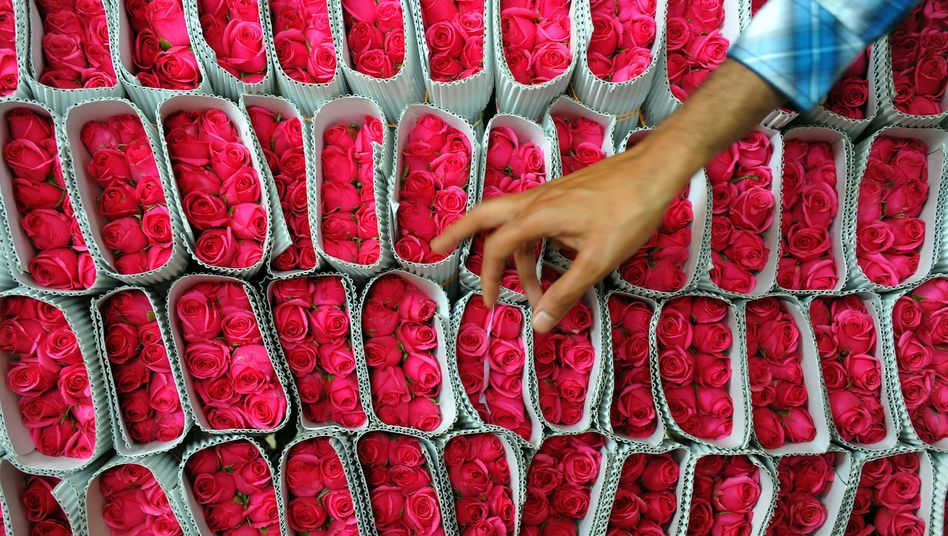 Romantik en gros in Bangalore: Nirgends ist der Strauß Rosen günstiger