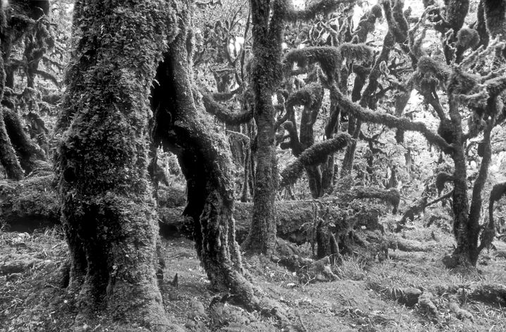 Zwischen Te Urewera und den indigenen Nga i Tu hoe besteht eine tiefe spirituelle Verbindung.
