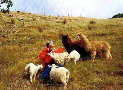 Tierliebhaber Farhad Vladi mit seinen Lamas und Ziegen.