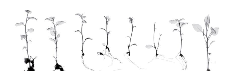 """Fotografin Dornith Doherty hat zehn Jahre lang Rönt-gengeräte dazu verwendet, die Schönheit von Samen und Pflanzenproben aus globalen Samenbanken einzufangen, für ein Projekt, das sie """"Archiving Eden"""" (""""Archivieren des Garten Eden"""") nennt."""