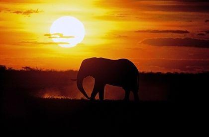 Safariromantik: An der Grenze zu Mosambik lohnen gleich zwei Parks einen Besuch