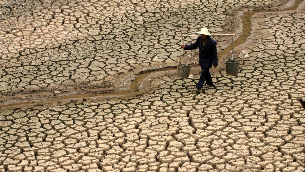 Lebensmittel: Welt in der Ernährungskrise