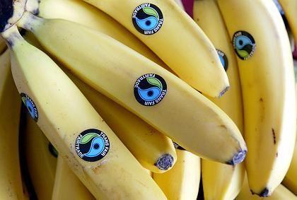 Etwas teurer, aber gerechter: Fair gehandelte Bananen mit dem Transfair-Siegel