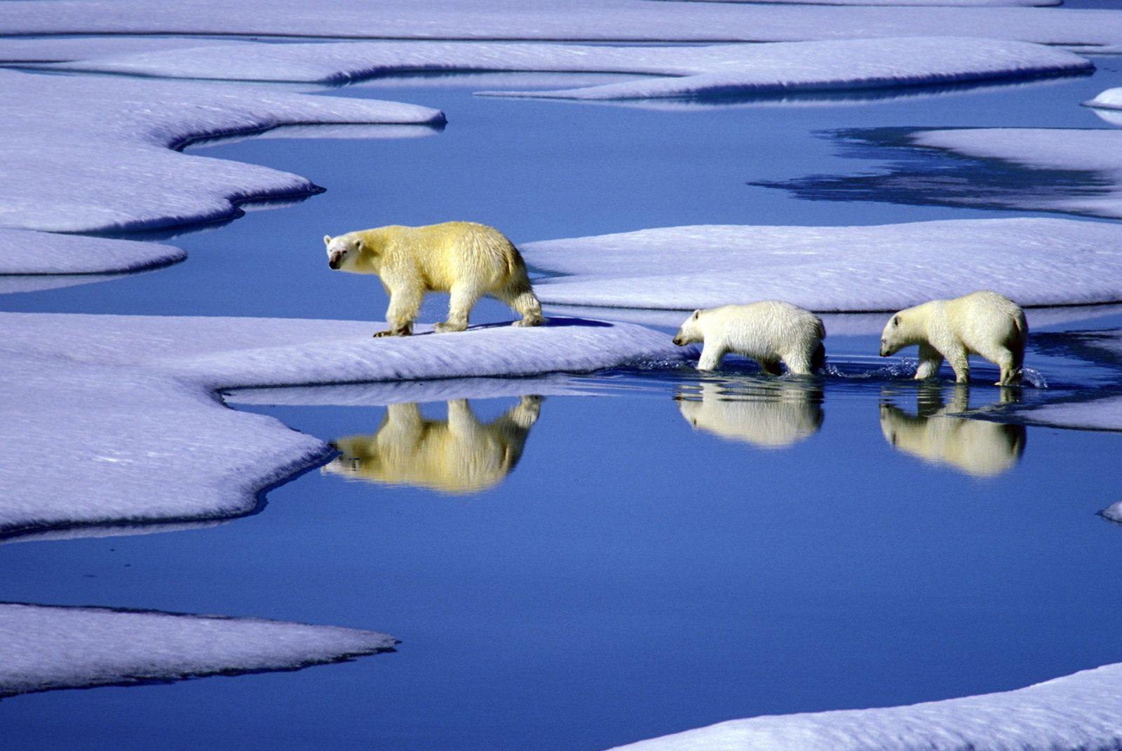 Eisbärenfamilie / Eisbär / Polarschmelze / Kanada Chronik 2009 Klima #6