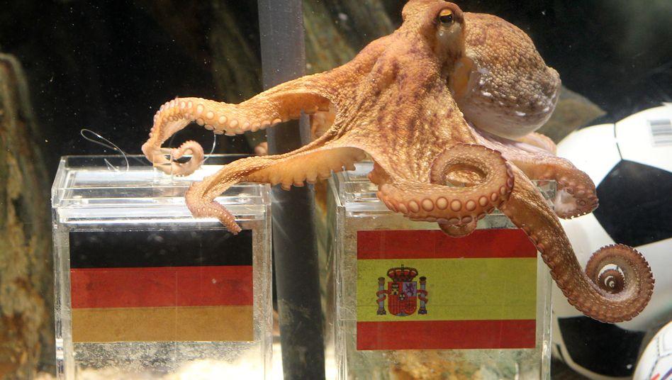 Hoffnungsspender: Spaniens Wirtschaft bietet einen kleinen Lichtblick. Die Krake Paul - WM-Orakel und Mollusk gleichermaßen - läge also richtig mit ihren optimistischen Tips