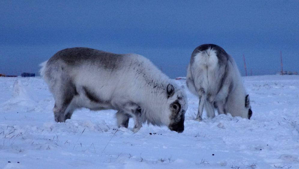 Norwegen: Spitzbergen im Winter