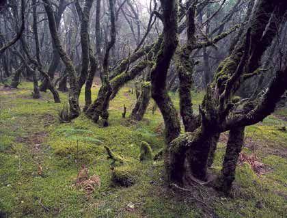 Grünes Glück: Wegen der hohen Luftfeuchtigkeit sind viele Baumstämme von Moosen überzogen