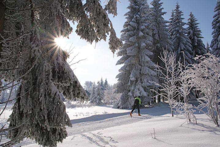 In der Wintersportregion bei Sankt Englmar im Bayerischen Wald steht Langläufern ein 105 Kilometer langes Loipennetz zur Verfügung.