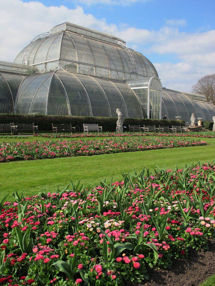 Akkurat angelegte Beete, gepflegter Rasen und riesige Gewächshäuser: So präsentieren sich die Kew Gardens in London.
