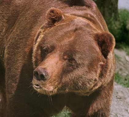 Bärensaison eröffnet: Die Stimmung an der Börse droht zu kippen