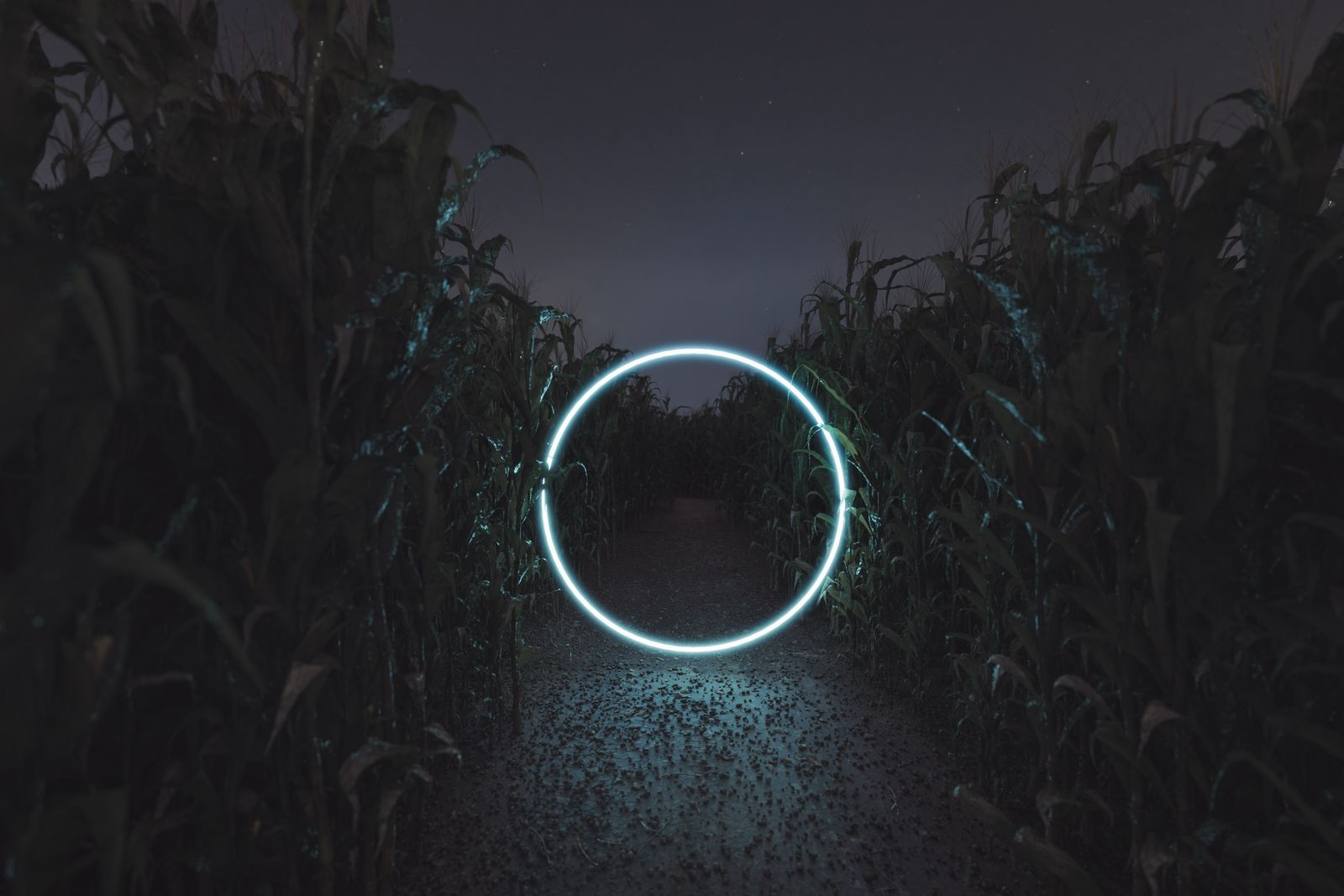 3d rendering of lighten circle portal in the middle of cornfield at night