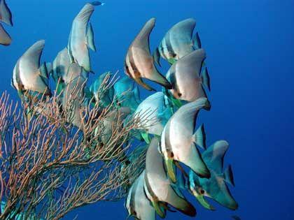 Fischparadies: Die farbenprächtige Unterwasserwelt der Malediven