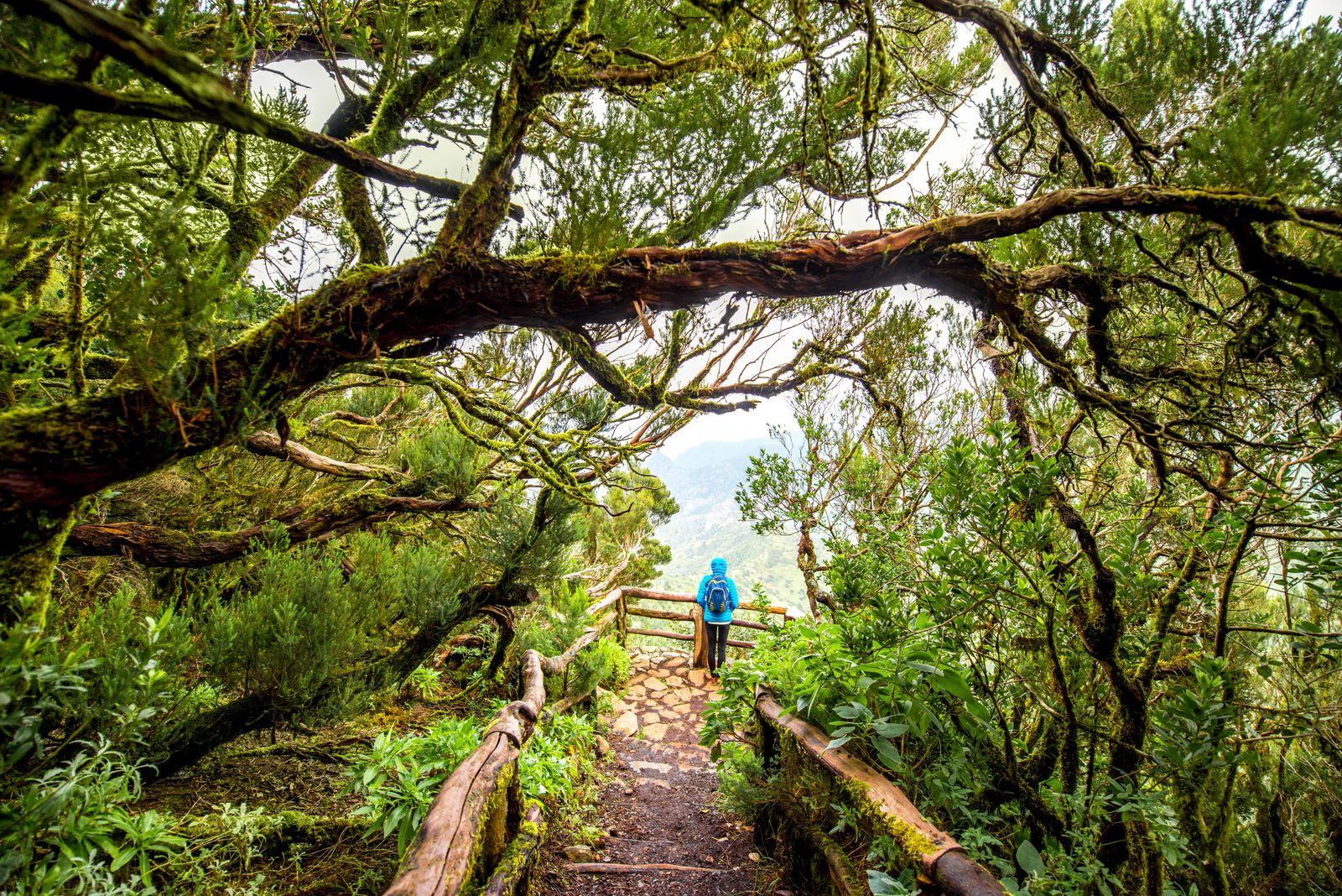 EINMALIGE VERWENDUNG Garajonay-Nationalpark auf La Gomera