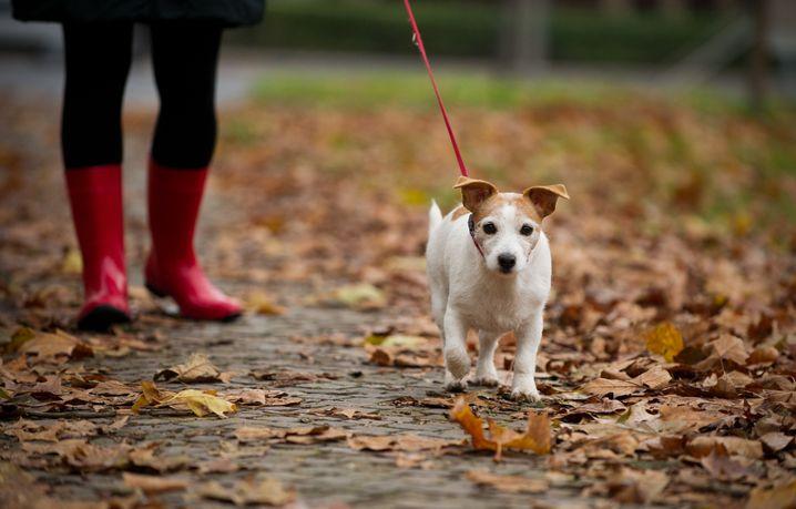 Ob mit oder ohne Hund: Einfach mal ein kurzer Spaziergang am Mittag wird ihren Tag bereichern