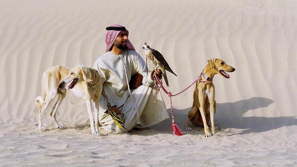 Hunderennen: Salukis in der Wüste