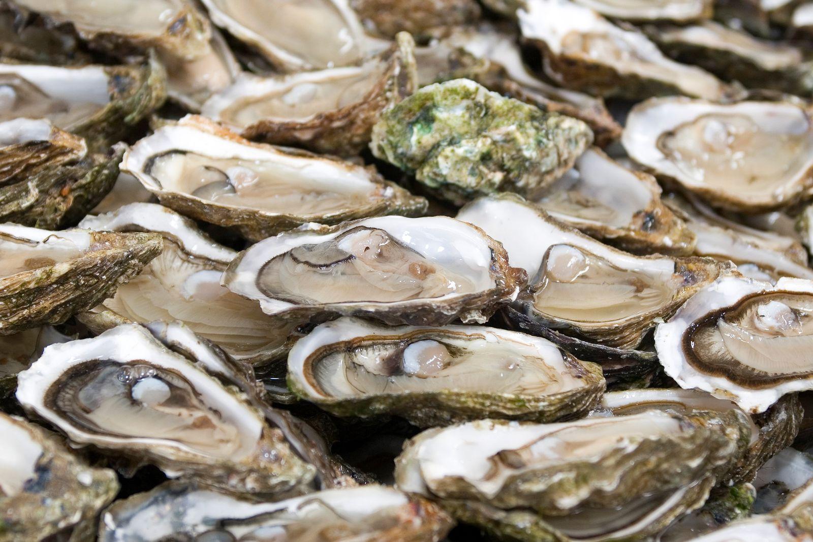 Austernfischen Frankreich / Austern