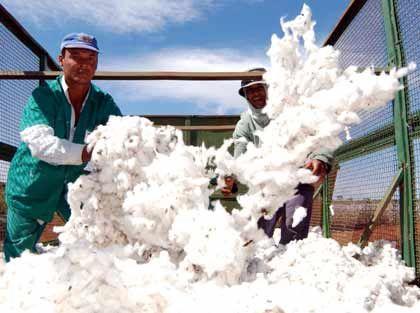 Geldquelle: Die steigenden Exporterlöse brasilianischer Baumwollbauern und südafrikanischer Goldminen treiben die Wirtschaft an und sorgen für steigendes Wachstum.