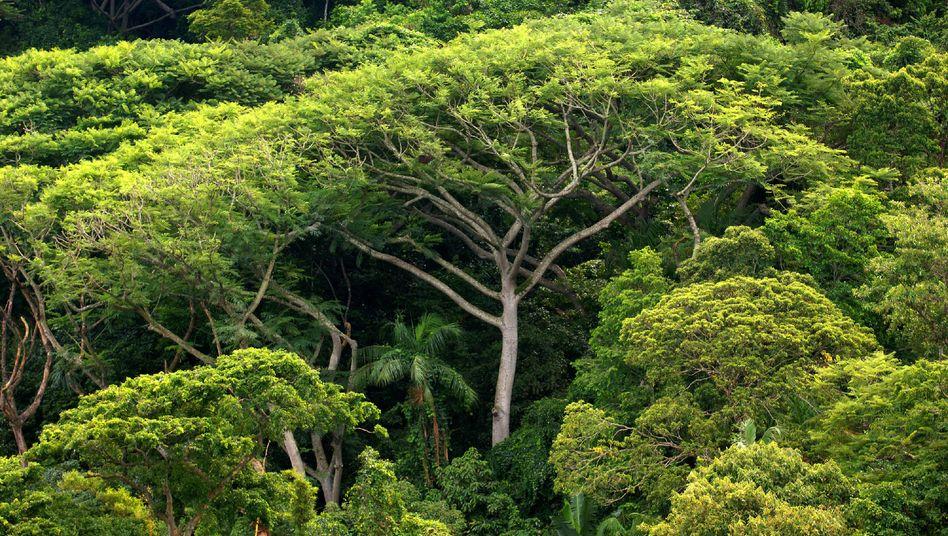 Bäume statt Fördertürme: Das Naturschutzgebiet bleibt unberührt