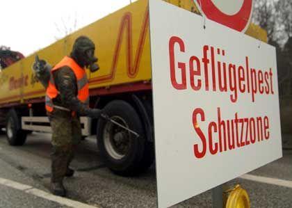 Schutzzone auf Rügen: Das Virus breitet sich auf der Insel immer weiter aus