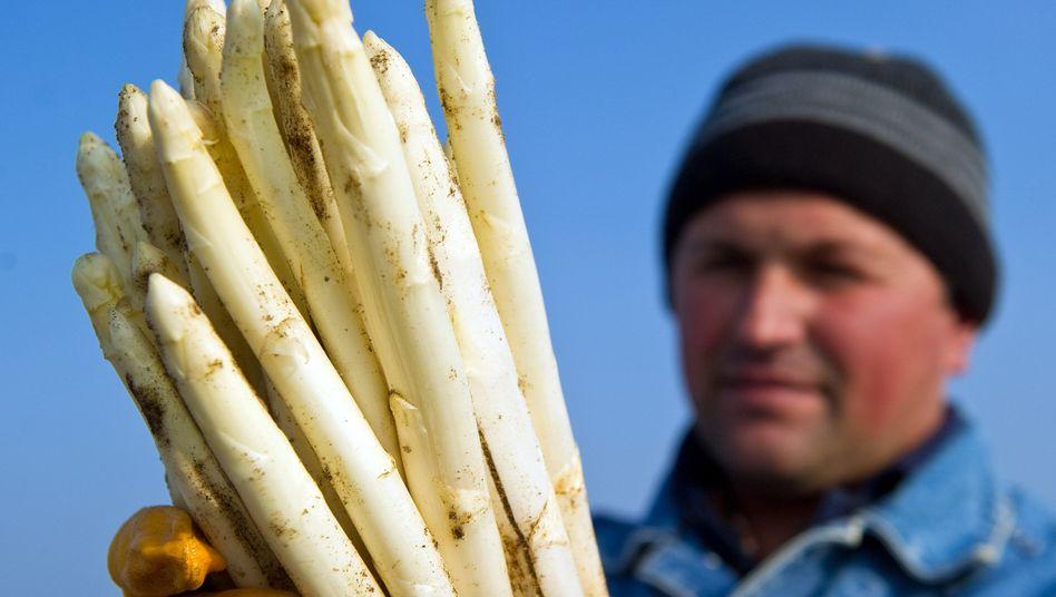Spargelernte: Als Saisonarbeiter für die harte Spargelernte waren Rumänen oder Bulgaren heiß begehrt. Mit der generellen Öffnung des deutschen Arbeitsmarktes ab 1. Januar aber schlagen die Emotionen hoch