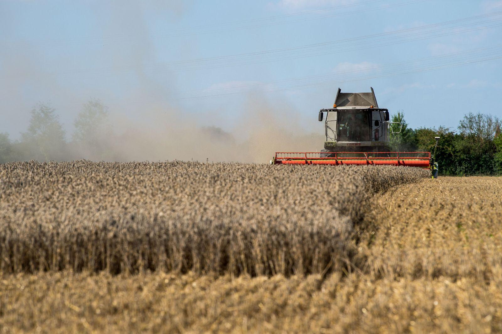 Welt-Getreideernte deckt Verbrauch nicht