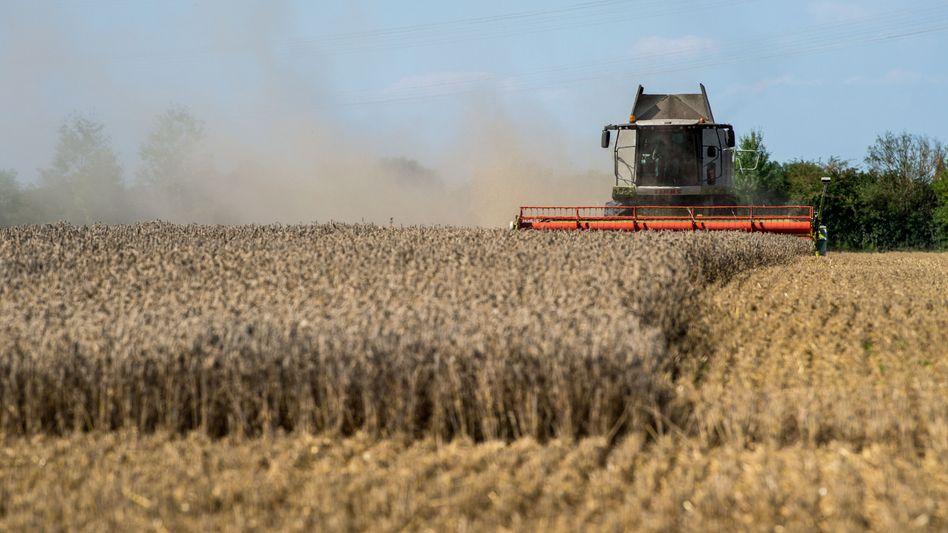Mähdrescher auf Weizenfeld: Die weltweite Getreideernte ist kleiner als der Bedarf
