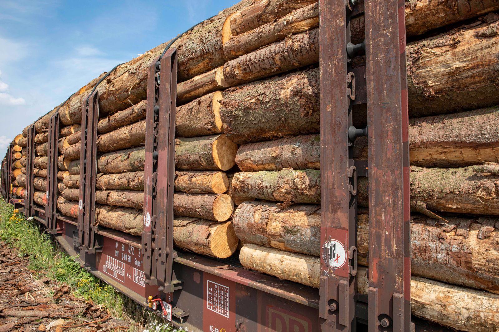 Holzpreis Bauholz in Deutschland teuer, Holzmangel trotz ...