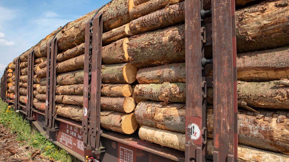 """Abtransport von Baumstämmen: """"Wir verschiffen derzeit Unmengen Holz aus Deutschland nach China und in die USA, und die deutschen Betriebe sammeln die verbliebenen Krümel ein"""""""