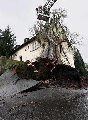 Sturmschäden: Die Feuerwehr entfernt einen Baum, der auf ein Haus in Frankfurt am Main gestürzt war
