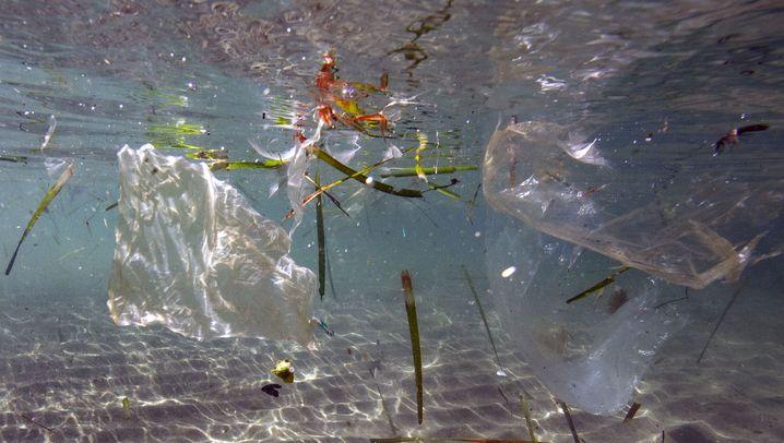 Nachteile der Tüten-Alternativen: Auf diesen Vergleich setzt die Plastiklobby