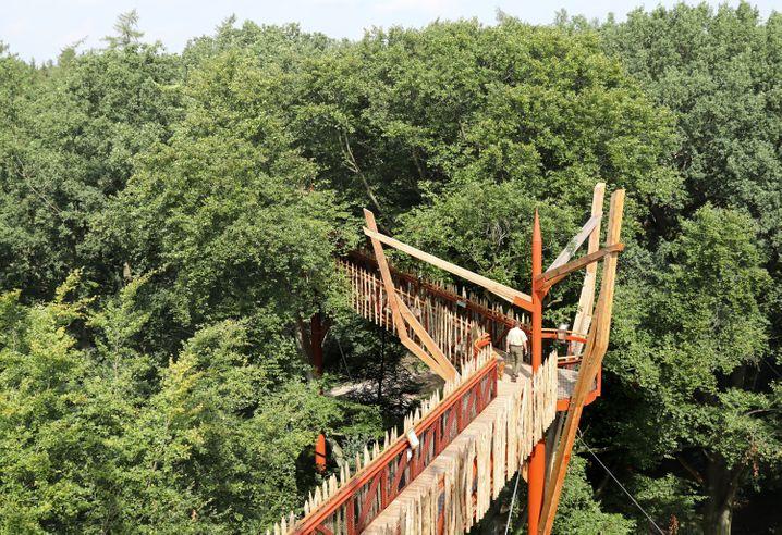Blick in die Kronen der Bäume: Baumkronenpfad im Tierpark Ivenack in Mecklenburg-Vorpommern.