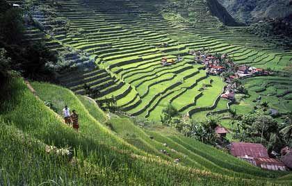 Eine Landschaft wie gemalt: Die Reisterrassen von Banaue liegen etwa 700 bis 1500 Meter über dem Meeresspiegel