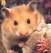 Kein Geschäft: Hamster, Wellensittich und Co. in den USA bekommen künftig keine Vitamine mehr von Bayer