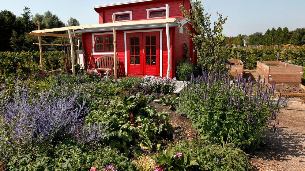 Gartenschau in Hamburg: Auf ins Blütenmeer