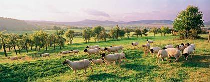 Mehr als Schafe: Neben dem berühmten Rhönlamm gibt es im Dreiländereck zwischen Hessen, Bayern und Thüringen noch so einiges zu entdecken