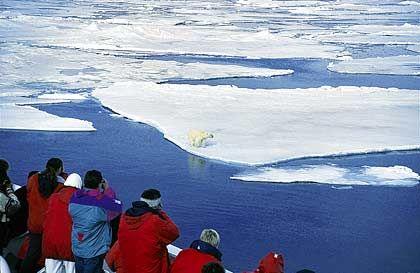 """""""Eisbär an Steuerbord"""": Wenn der Kapitän eine solche Durchsage macht, strömen die Passagiere meist schnell an die Reling"""