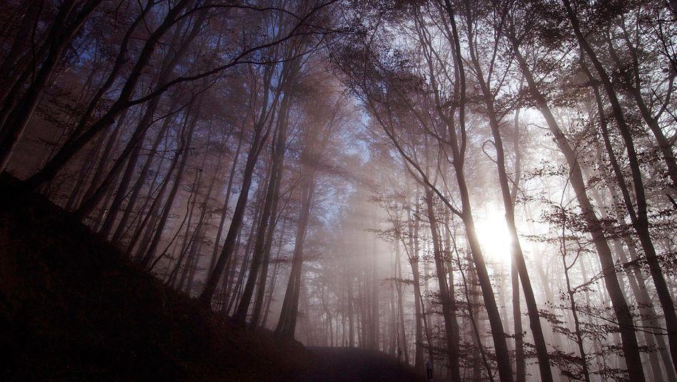 Flucht in Sachwerte: Aus Angst vor Inflation steckt mancher Investor sein Geld in Forstinvestments